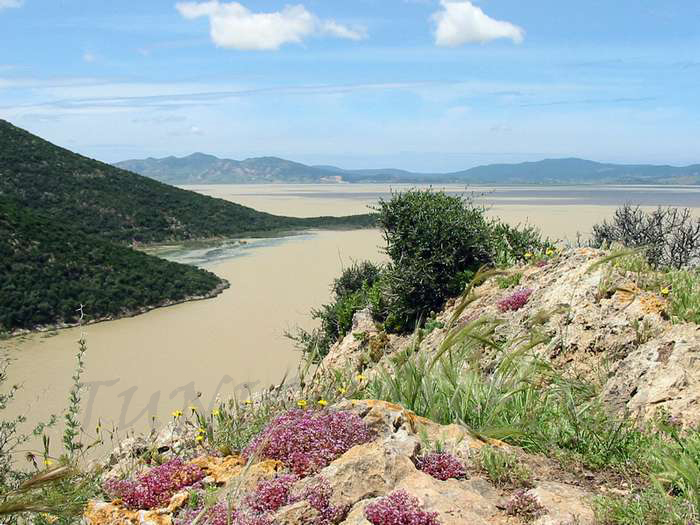 السياحة - السياحة في تونس 22871alsh3er
