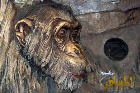 صورة شجره تمجع كل الحيوانات ...