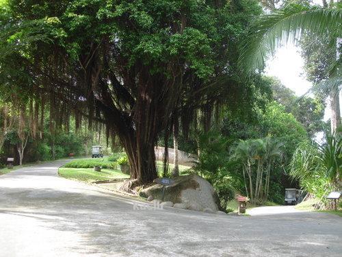 منتجع شجرة الجوز
