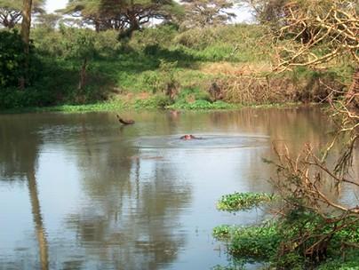 جمال كينيا
