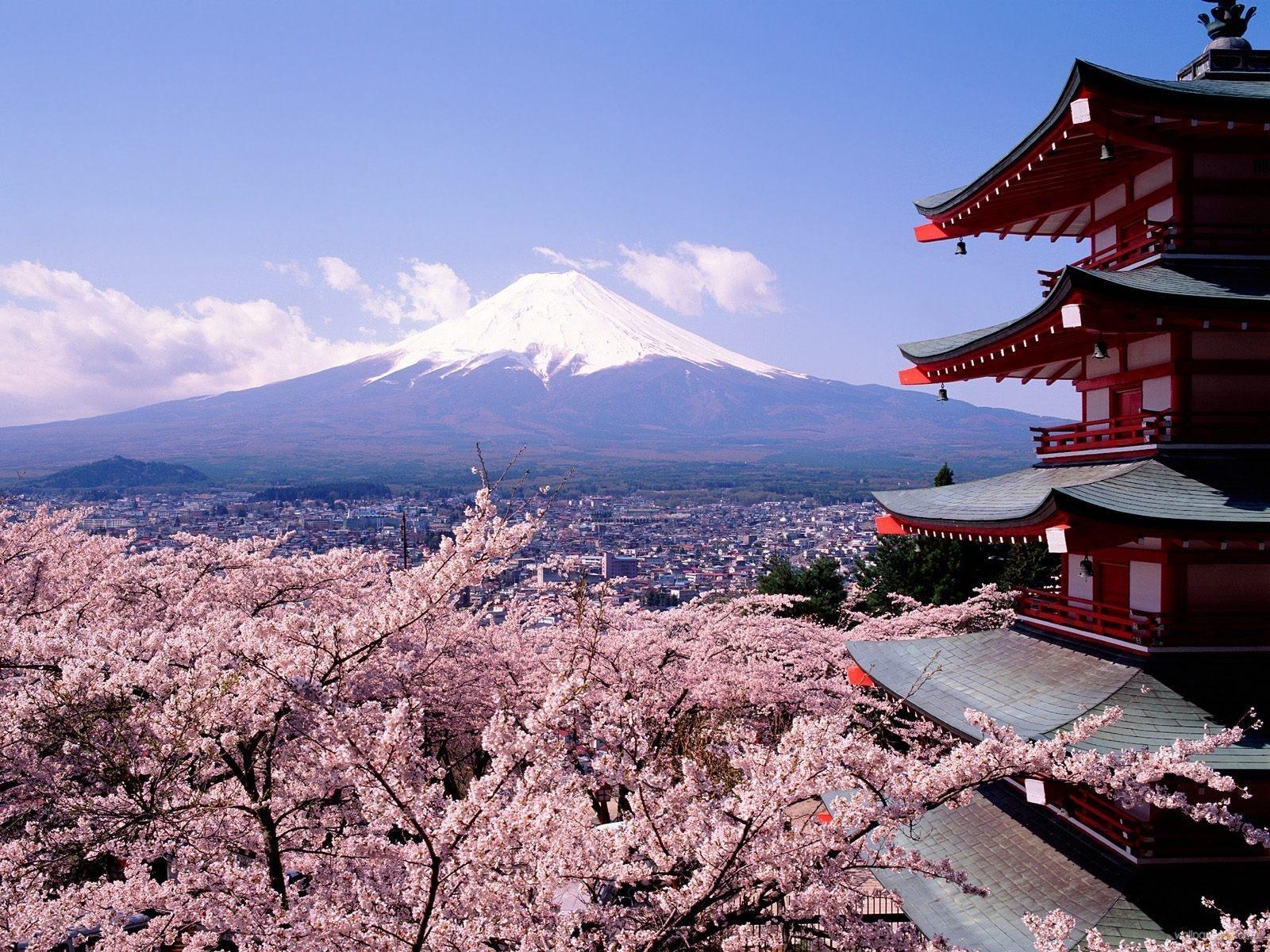 -tokyo_cherry_blossoms-jpg