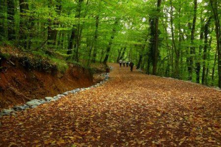 كيف اذهب الى غابات بلغراد(رحلة في أحضان الطبيعة)