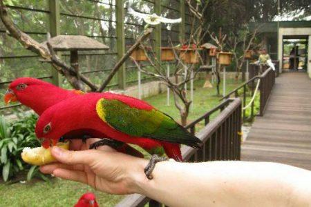 شرح حجز تذكرة حديقة الطيور كوالالمبور