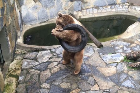تقرير عن افضل حديقة حيوان باسطنبول