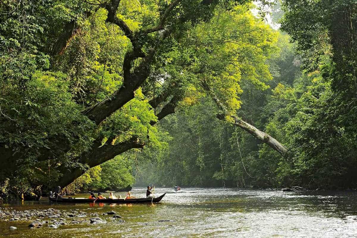 تامان نيجارا ماليزيا تعرف على اقدم غابات العالم