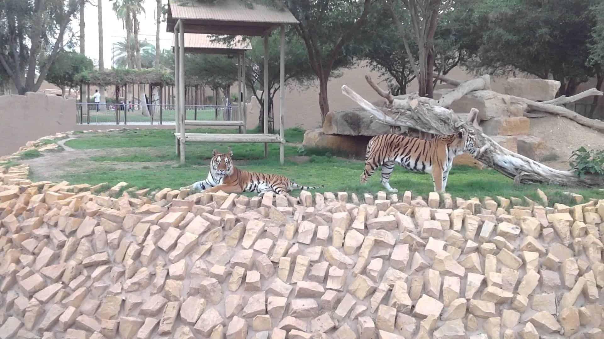 ما لاتعرفه عن حديقة الحيوان بالرياض