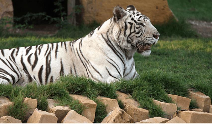 ما لاتعرفه عن حديقة الحيوان بالرياض عطلات