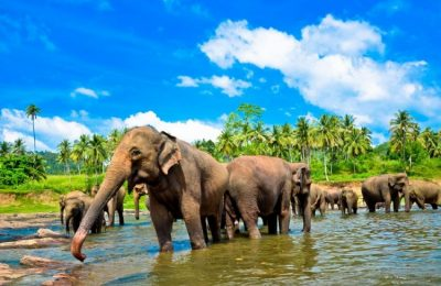 سفرتي الى سريلانكا بلاد الطبيعه