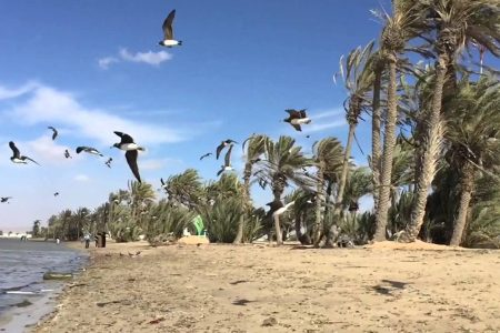 اهم الأنشطة السياحية في املج