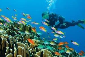 تجربة الغطس في أعماق المياه – جزر المالديف – جزيرة كودا هورا