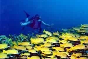 ممارسة الرياضات المائية – المالديف – جزر المالديف