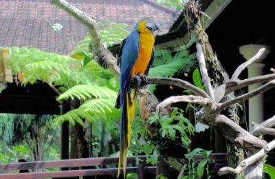 تقرير عن حديقة بالي للطيور Bali Bird Park في جزيرة بالي