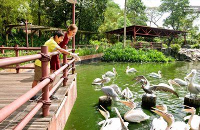 شرح شراء تذاكر دخول حديقة الطيور في سنغافورة اونلاين