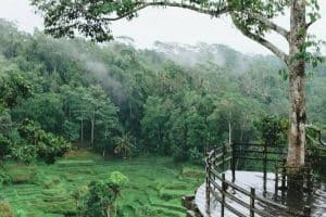 جولة في جزيرة بالي - إندونيسيا - جزيرة بالي
