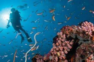 الغوص في أعماق المياه – المالديف – ثيلا