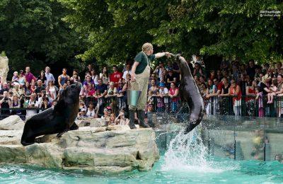 تذكرة لحديقة حيوان تشونبرون