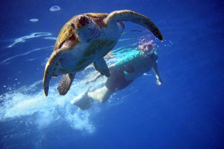 احجز اونلاين جولة التجذيف و الغوص مع السلاحف في تينيريفي
