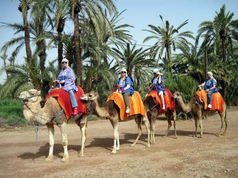 تجربة ركوب الجمال و الدراجات الرباعية في صحراء مراكش