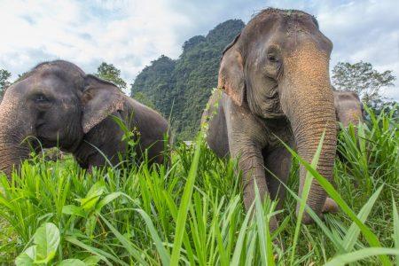 حجز جولة 7 ساعات سفاري في الغابات البرية ساموي تايلندا