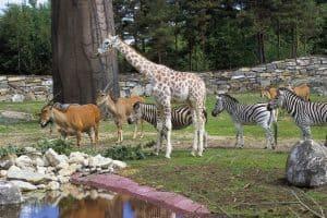 رحلة سفاري - الذهاب الى حديقة حيوان دبي د33