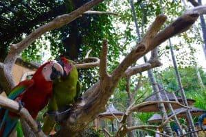 زيارة حديقة الطيور والزواحف – إندونيسيا – بالي