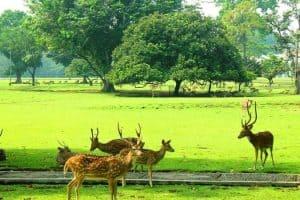 زيارة مدينة بوقور - إندونيسيا - بوقور