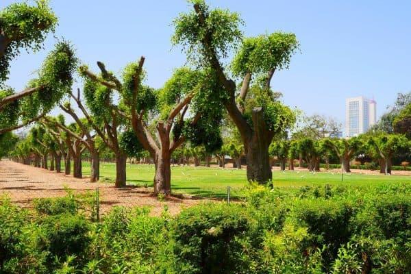 حديقة الجامعة العربية