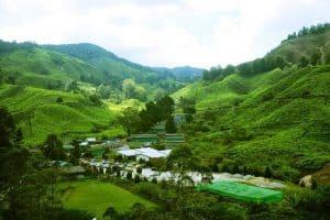 زيارة مرتفعات كاميرون هايلاند - ماليزيا - ولاية بهانج