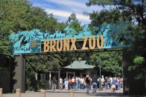 زيارة حديقة حيوانات برونكس - امريكا - نيويورك