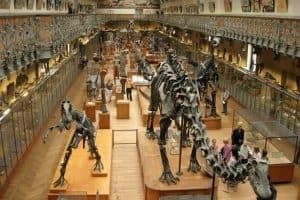 جنيف - متحف التاريخ الطبيعي 10 5