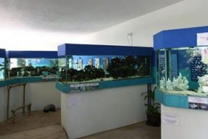متحف نافال - حوض السمك موريشيوس مو51