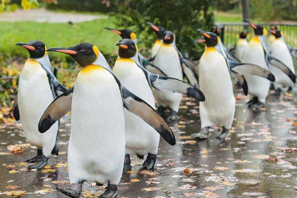 حديقة الحيوان Basel Zoo