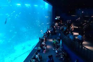 الذهاب الى سي اكورايوم S.E.A. Aquariumس106