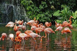 الذهاب الى منتزه يورونغ للطيور jurong bird park س109
