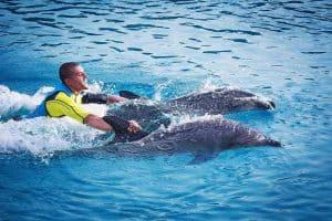خليج الدلافين ك105