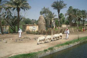 زيارة أشهر الأماكن الأثرية - مصر - القاهرة
