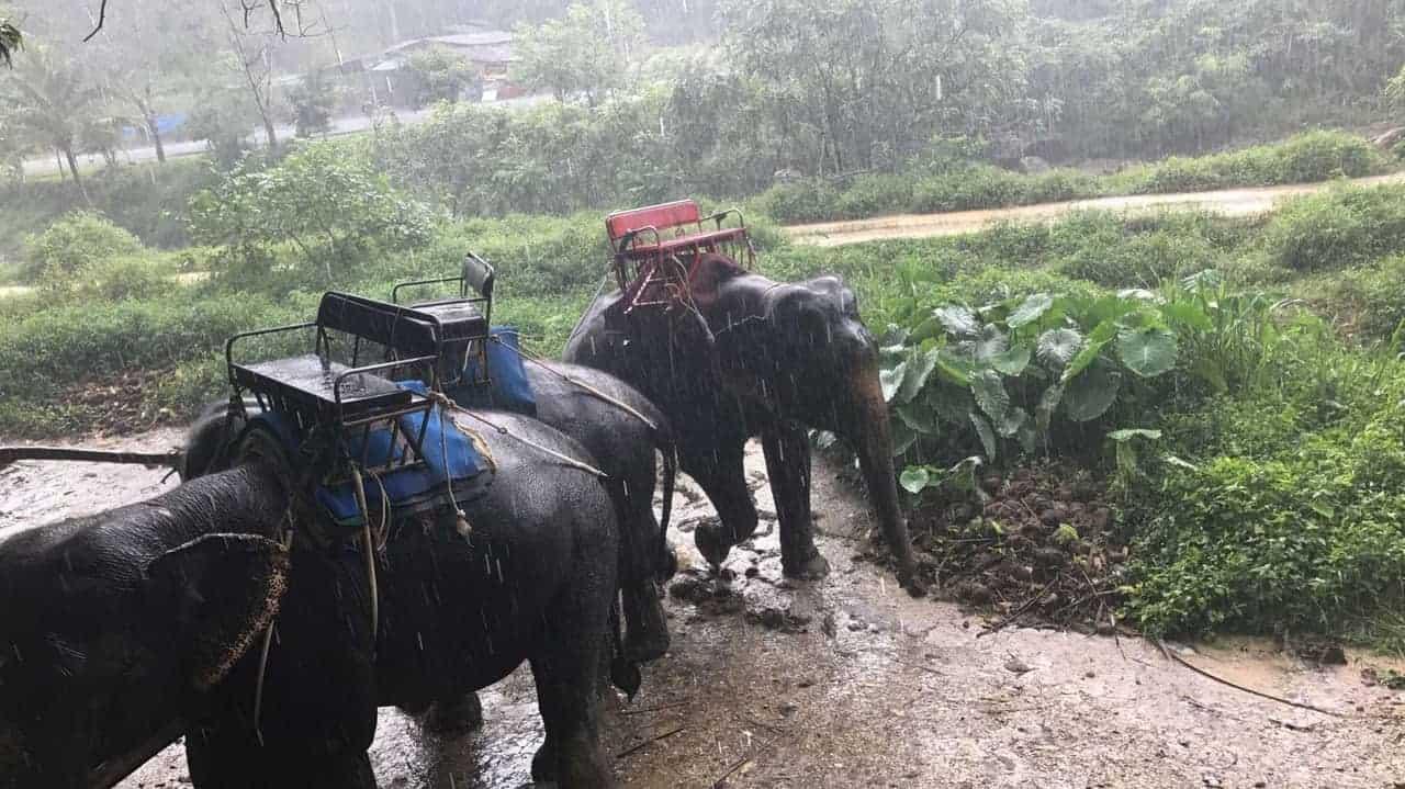 سفاري وركوب الأفيال