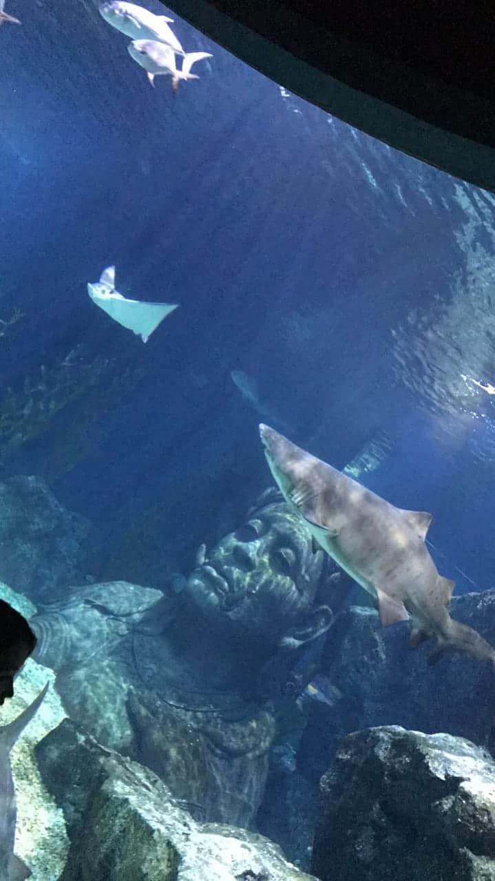عالم البحار في بانكوك