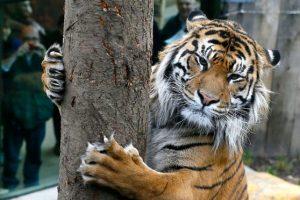 ل13  حديقة حيوان لندن  -متحف فيكتوريا وآلبرت للطفولة