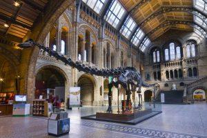 ل3 Camden town – المتحف الطبيعي