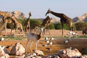 حديقة حيوان دبي ك159