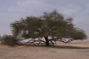 زيارة شجرة الحياة  – البحرين – البحرين