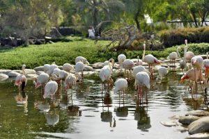 زيارة أشهر الأماكن السياحية - البحرين - المنامة