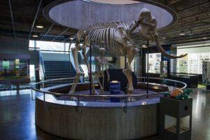 زيارة متحف التاريخ الطبيعي ومتحف آريانا