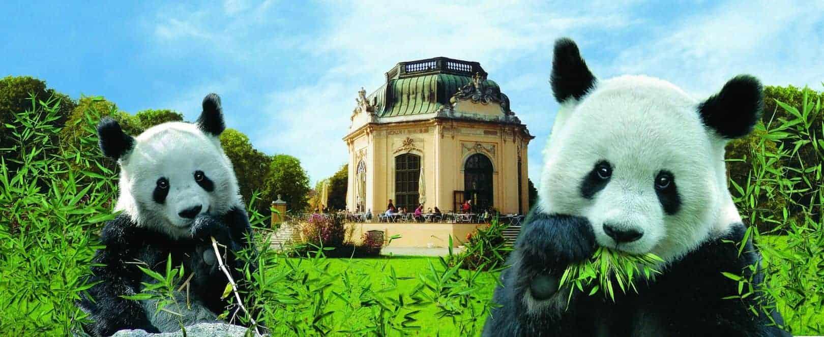 زيارة حديقة حيوان تشونبرون في فيينا