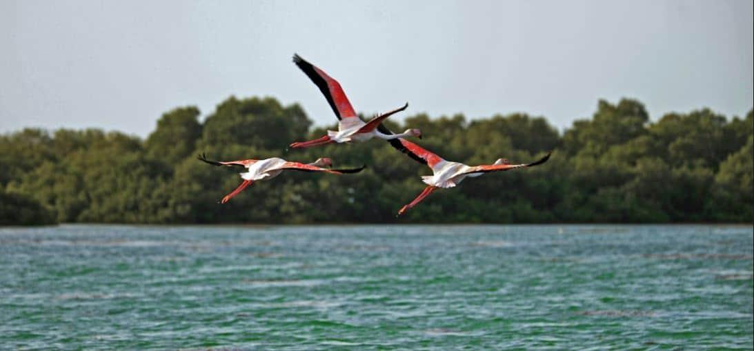 أهمية جزيرة جنا السعودية
