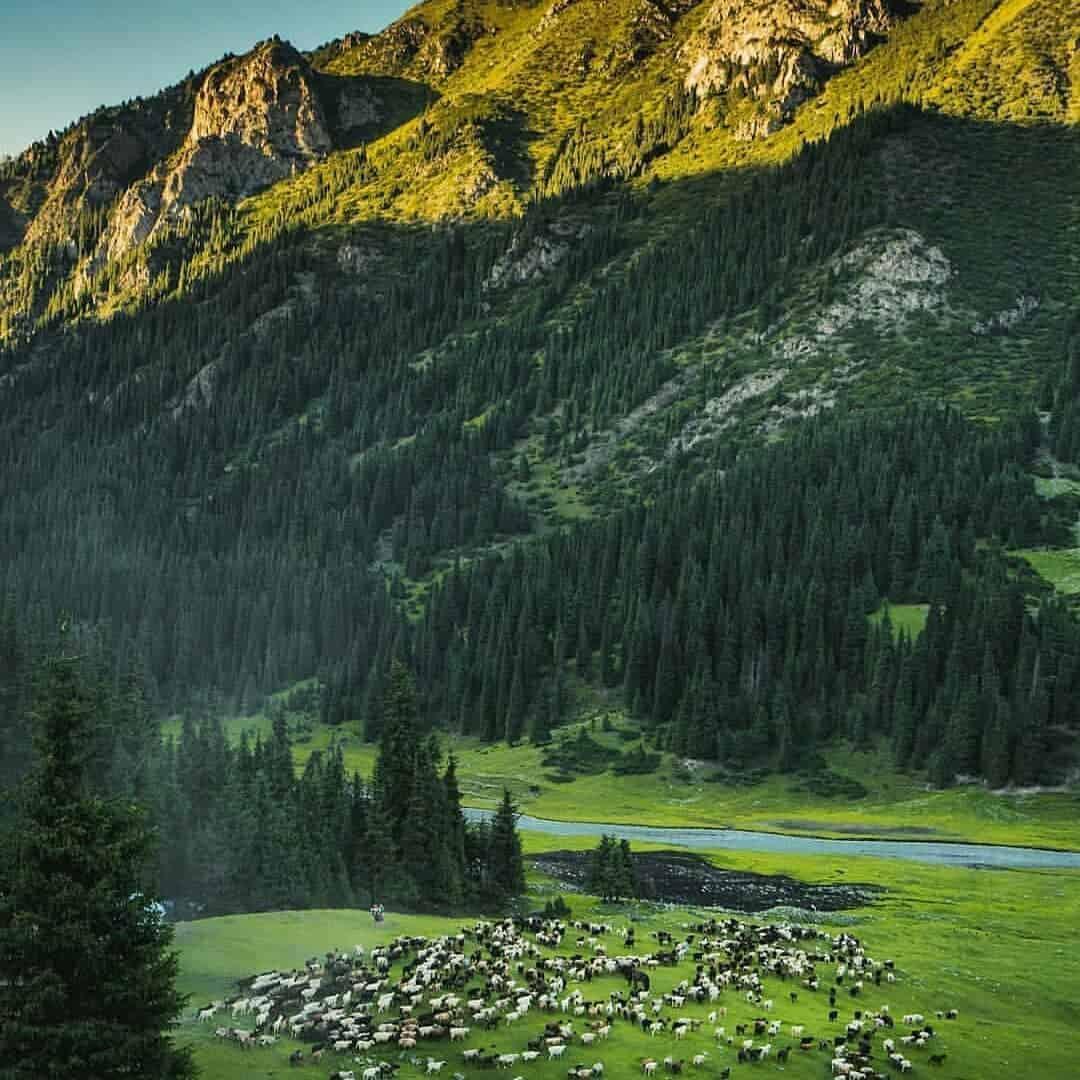 الارشا قرغيزستان