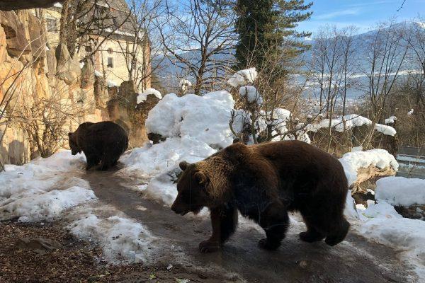 حديقة حيوان جبال الألب