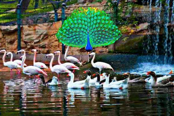 حديقة وادي الطيور أكادير