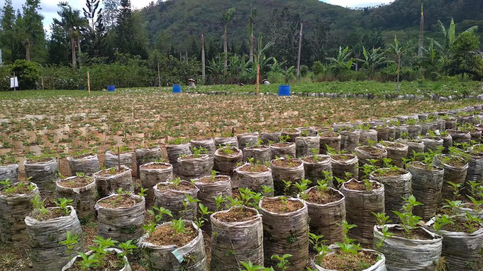 افضل 7 أنشطة عند زيارة حديقة الفراولة في بونشاك